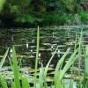 Żubry w budce dla ptaków i inna dzika zwierzyna w Miejskim Parku w Przasnyszu